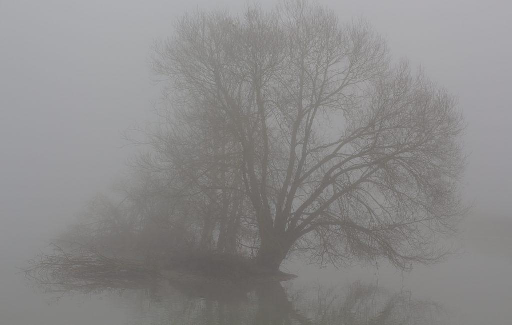 Die Ruhe im Nebel
